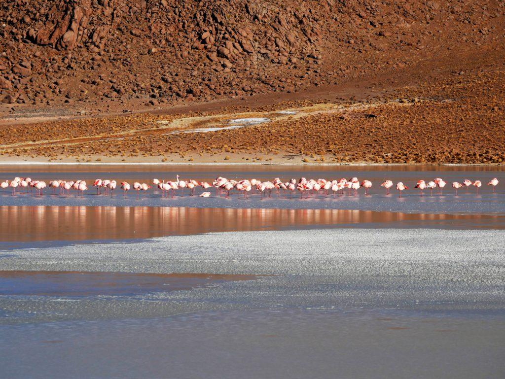 P1030245 1024x769 Sud Lipez, Salar dUyuni, Tupiza : Roadtrip en Bolivie