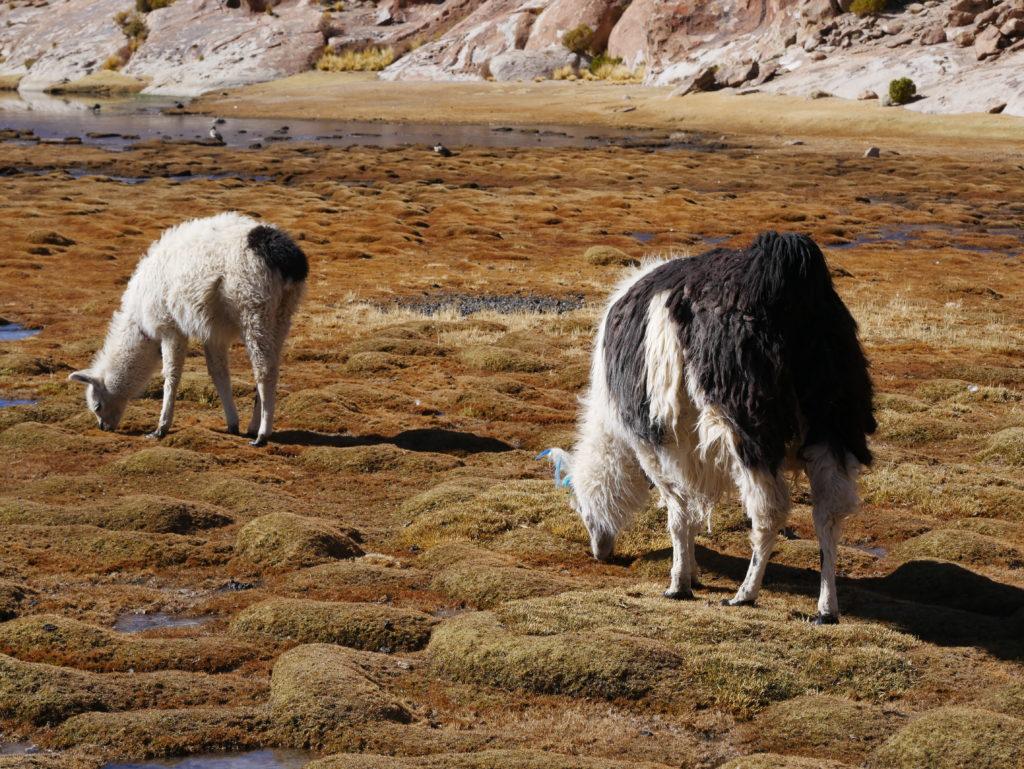 P1030422 1024x769 Sud Lipez, Salar dUyuni, Tupiza : Roadtrip en Bolivie